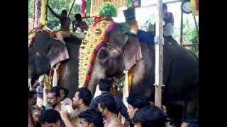 Thechikottukavu Ramachandran  /  majestic elephant/ tallest & big elephant in kerala /star elephants