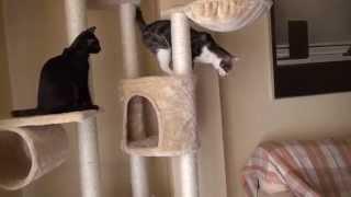 Rascador para gatos modelo Xanthos