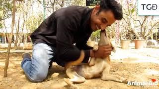 10 Động vật may mắn nhận được sự cứu giúp của con người