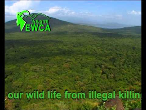 Invest on Wildlife in Ethiopia.avi