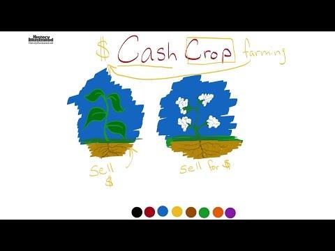 Cash Crop  Definition for Kids