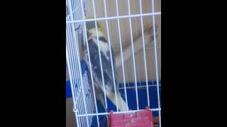 Попугай насилует бревно