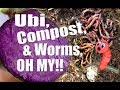 Woodchips Turned Compost, Worms, Harvest Ubi Purple Yam