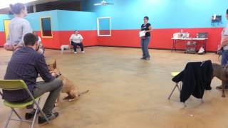 Dog Training Handling Tips