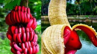 10 Frutas Más Extrañas y Raras Del Mundo