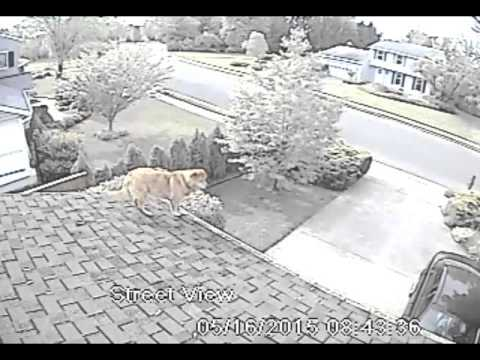 Dog Plays On Roof Doovi
