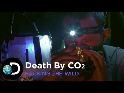 Death By CO2 | Hacking The Wild