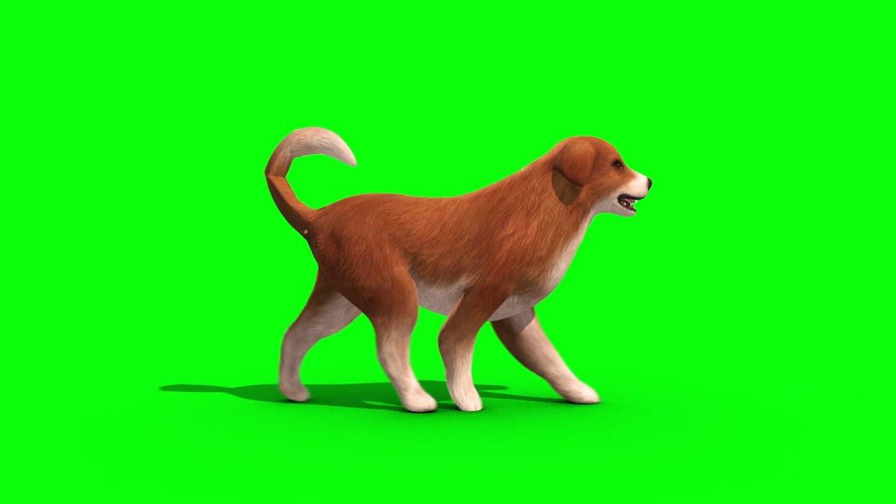Bark Dog Walking