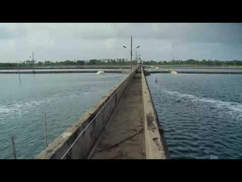 EXPERTS IN SUSTAINABLE AQUACULTURE & FISH FARMING PROJECTS