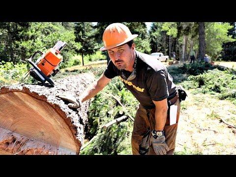 I Dropped A Tree On The White House $#%!@