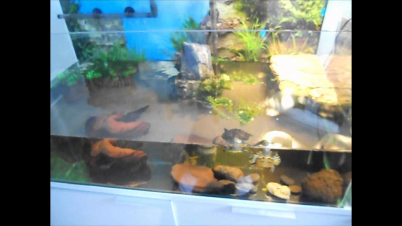 New turtle tank yellow bellied sliders doovi for Koi fish tank setup