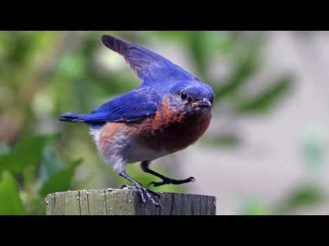 Ryan Bingham – Bluebird