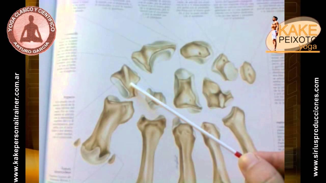 El esqueleto humano 6: Huesos de la Mano. - YouTube