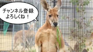 Twitterで先行して写真をアップした王子動物園の動画です。 小春は出ま...