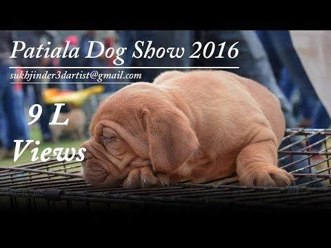 Patiala Dog show 2016