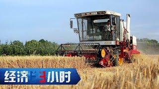 《经济半小时》 20190703 闯出农村就业新天地| CCTV财经