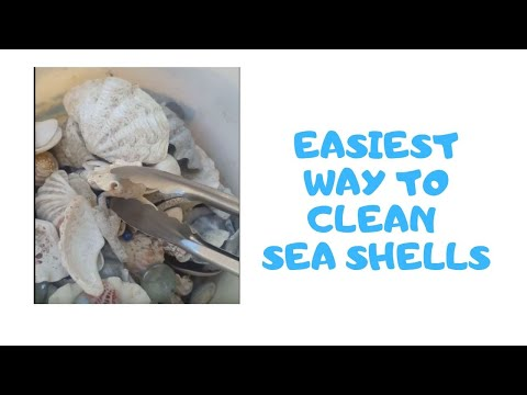 HOW TO CLEAN SEA SHELLS EASILY!