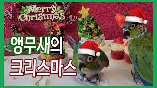 앵무새의 크리스마스 홈파티 Parrot's Christ…