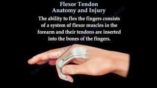 Flexor Tendon Anatomy And Injury  - Everything You Need To Know - Dr. Nabil Ebraheim