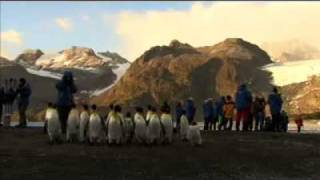 Antarctica's amazing wildlife aboard National Geographic Explorer, Lindblad Expeditions