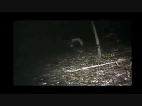 Scène finale du film projet Blair witch vf streaming vf