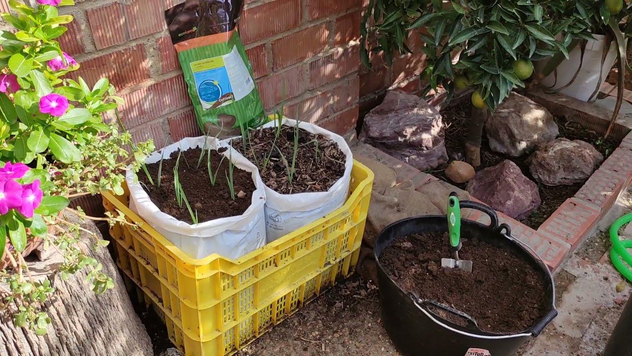 Cómo cuidar de nuetras plantas con una buena alimentación