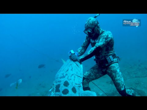 Spearfishing Mozambique - ASD