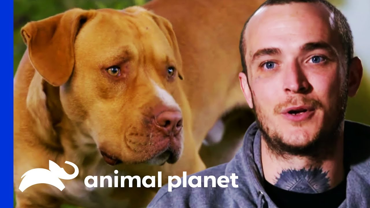 Marcel Rescues Two Scared Dogs Next To A Highway Pit Bulls Parolees Youtube