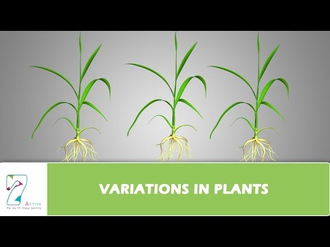 VARIATIONS IN PLANTS