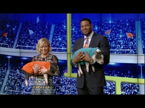 Piglets Predict the Super Bowl
