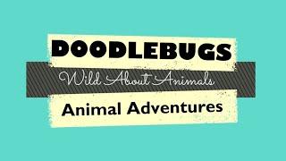Wild About Animals Trailer