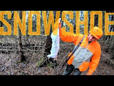 Snowshoe Hare Rabbit Hunting In The Catskill Mountains
