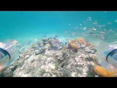 Troop 22 Bahamas Trip- OpenROV Dive #1