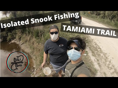 Isolated Snook Fishing On Tamiami Trail