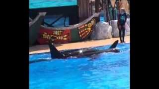 SeaWorld San Diego: Shamu the orca (killer whale)