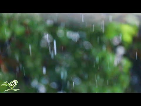 Relaxing Music & Soft Rain Sounds - Peaceful Piano Music for Sleep & Relaxation music