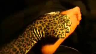 Video Leopard Lady Tickling Feet To Man download MP3, 3GP, MP4, WEBM, AVI, FLV Mei 2018