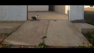 Como dominar as subidinhas de garagem (exercícios para os treinos)