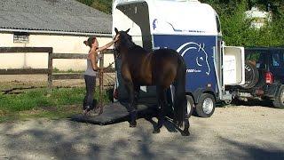 Travail en éthologie - Embarquement d'un cheval difficile dans un van.