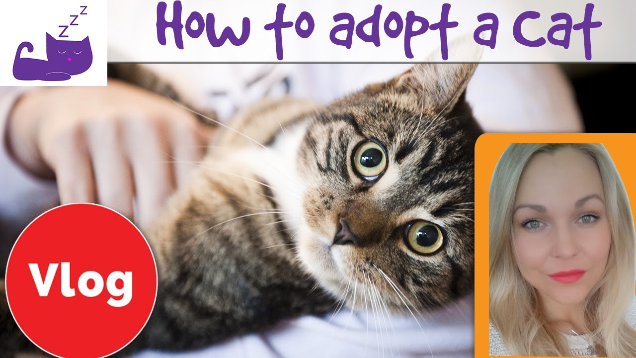 How to adopt a cat 😺 my cat adoption story 😺