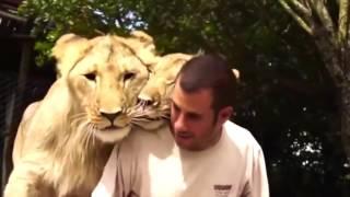 Видео приколы с животными / нарезка смешных видео