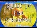 Where to find Sunshrooms ! Zelda botw