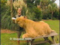 Liger on National Geographic Humanzee