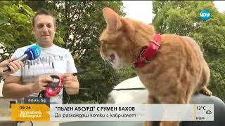 """""""Пълен абсурд"""": Да разхождаш котки с кабриолет - Здравей, България (24.09.2019)"""