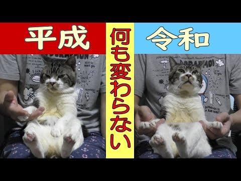 パパの膝に乗る猫の姿が可愛すぎる☆平成が令和に変わろうとも一切ブレない猫リキちゃん☆令和元年も甘えん坊猫まっしぐら☆【リキちゃんねる 猫動画】Cat video キジトラ猫との暮らし