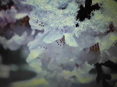 【淡雪】 堀内美和 唄ってみました🎶 ai