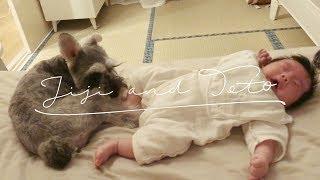 トトなりのベビーシッターでしょうか🤔 トトは赤ちゃんが大好きなようで...