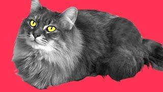Cat Trust Thumbnail