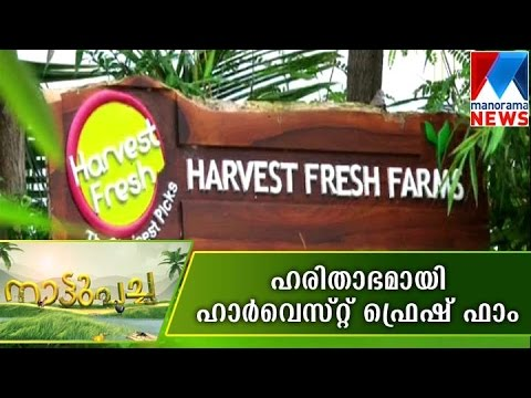 Wide variety farming in harvest fresh farm - Nattupacha | Ma