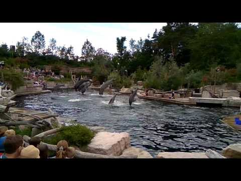 dolphin show at Nurenberg, Germany